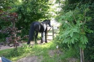 paard bij ingang